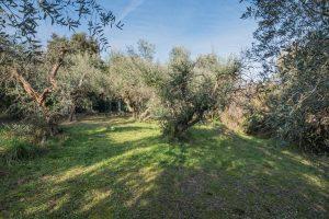 Agriturismo in vendita a Torre di Palme nelle Marche (29)