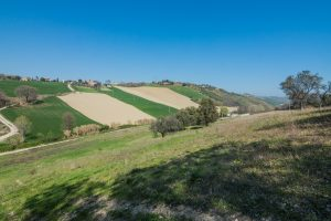 L'Agenzia Immobiliare Puzielli propone casolare in vendita a Lapedona nelle Marche