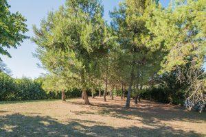 L'Agenzia Immobiliare Puzielli propone casale con piscina in vendita a Fermo nelle Marche