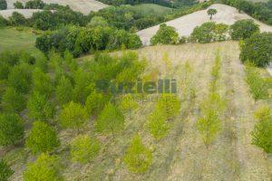 L'Agenzia Immobiliare Puzielli propone casa di campagna vista panoramica (19)