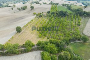 L'Agenzia Immobiliare Puzielli propone casa di campagna vista panoramica (20)