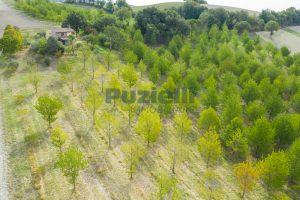 L'Agenzia Immobiliare Puzielli propone casa di campagna vista panoramica (23)