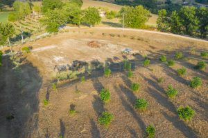 L'Agenzia Immobiliare Puziellipropone casale ristrutturato in vendita a Camporoton (11)